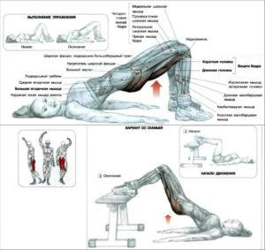 anatomija-uprazhnenija
